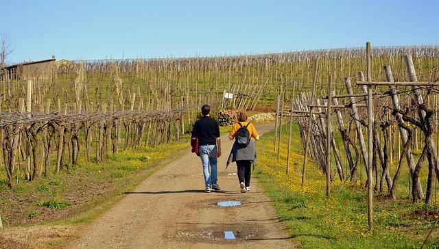 procházka vinicí